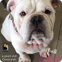 Adopt A Pet :: Samson - Santa Ana, CA