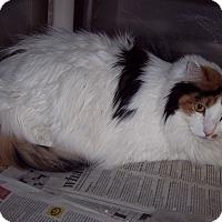 Adopt A Pet :: Tara - Olivet, MI