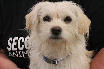 Shih Tzu Mix Puppy for adoption in Rosamond, California - Pink