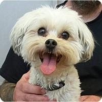 Adopt A Pet :: Nichi - Salem, OR