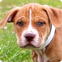 Adopt A Pet :: Bugsy~adopted! - Glastonbury, CT