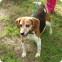 Adopt A Pet :: Shelby - Dumfries, VA