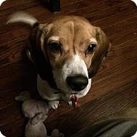 Adopt A Pet :: Ravenclaw - Livonia, MI