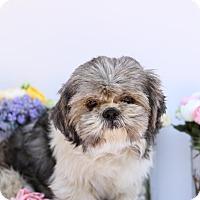 Adopt A Pet :: Dusty - Auburn, CA