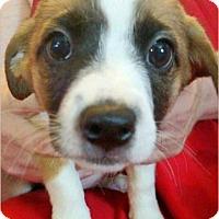 Adopt A Pet :: Mario - Rancho Cucamonga, CA