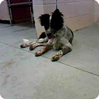Adopt A Pet :: TOMLIN - Conroe, TX