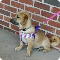Adopt A Pet :: Beemer - Doylestown, PA