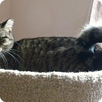 Adopt A Pet :: Kiri - Sunderland, ON