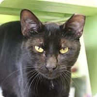 Adopt A Pet :: Jimbo - Indianapolis, IN