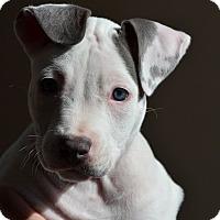 Adopt A Pet :: Katie - Mission Viejo, CA
