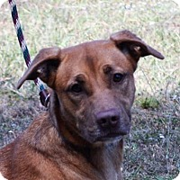 Adopt A Pet :: **DIAMOND** MEET NOV 19TH! - Mukwonago, WI