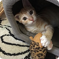 Adopt A Pet :: Spike - Leander, TX