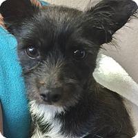 Adopt A Pet :: Jenna - Palm Desert, CA