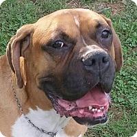 Adopt A Pet :: Gunnar - Staunton, VA