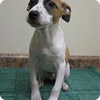 Adopt A Pet :: Milton - Gary, IN