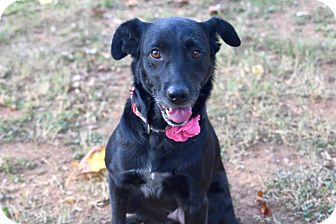Retriever (Unknown Type)/Labrador Retriever Mix Dog for adoption in Knoxville, Tennessee - Bonnie