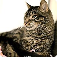Adopt A Pet :: Fiona - Appleton, WI