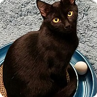 Adopt A Pet :: Batman - Jeannette, PA