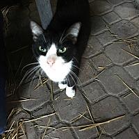 Adopt A Pet :: Milo - Lauderhill, FL