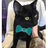 Adopt A Pet :: Lonestar - Paducah, KY