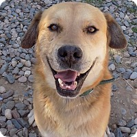 Adopt A Pet :: Herman - Phoenix, AZ