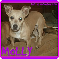 Adopt A Pet :: MOLLY - Mount Royal, QC
