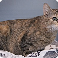 Adopt A Pet :: Wendy - O Fallon, IL