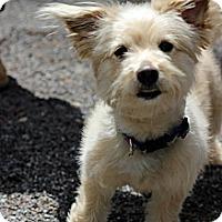 Adopt A Pet :: Clark Kent - Tinton Falls, NJ