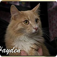 Adopt A Pet :: Hayden - Albuquerque, NM