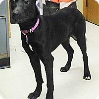 Adopt A Pet :: Samatha - Washington Court House, OH