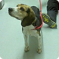 Adopt A Pet :: Dakota Ridgley - Waldorf, MD