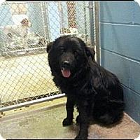 Adopt A Pet :: Ted - Alexandria, VA