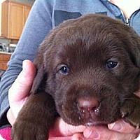 Adopt A Pet :: Comet - Alexandria, VA