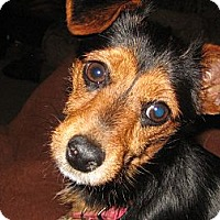 Adopt A Pet :: Fiona - Commerce City, CO