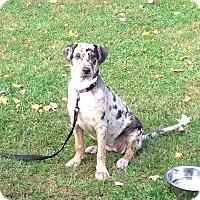 Adopt A Pet :: Chrissy - Hollis, ME