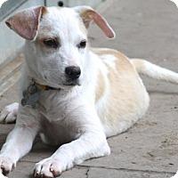 Adopt A Pet :: Kippy - ADOPTION PENDING! - Norwalk, CT
