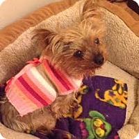 Adopt A Pet :: Tina - Los Angeles, CA