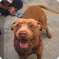 Adopt A Pet :: Kodiak - Gainesville, FL