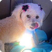 Adopt A Pet :: Gianna - Rancho Cucamonga, CA