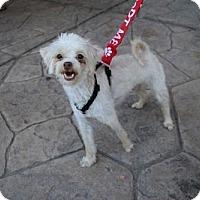 Adopt A Pet :: Porky - Sacramento, CA