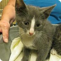 Adopt A Pet :: Mouse, Possum, & Bear (Brandywine PetSmart) - Wilmington, DE
