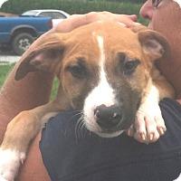 Adopt A Pet :: Brody - Medora, IN