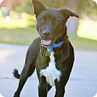 Adopt A Pet :: Jigsaw - Salt Lake City, UT