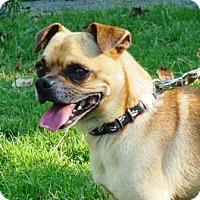 Adopt A Pet :: Rudy - Great Falls, VA
