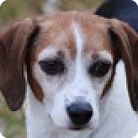 Adopt A Pet :: Millie - Portola, CA