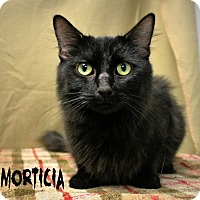 Adopt A Pet :: Mortricia - Melbourne, KY
