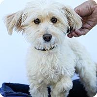 Adopt A Pet :: Frosty - Auburn, CA