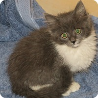 Adopt A Pet :: Sequoia - Bedford, VA