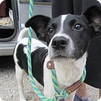 Pointer Mix Dog for adoption in Von Ormy, Texas - Micki