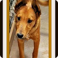 Adopt A Pet :: Willard - Tombstone, AZ